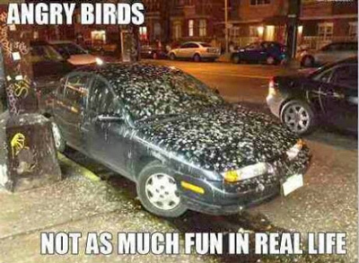 angry-birds-real-life