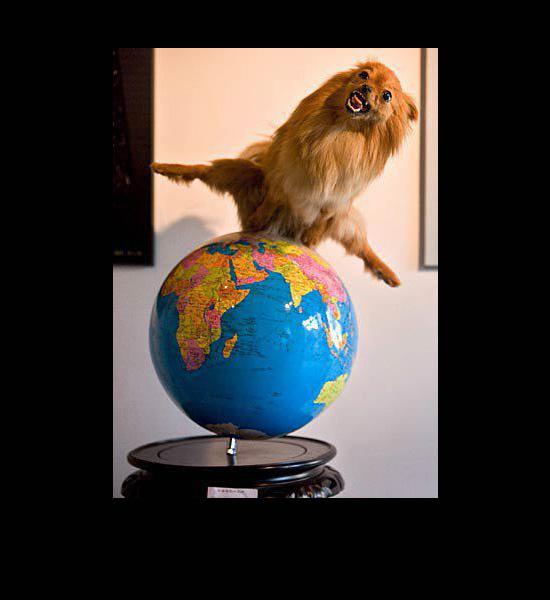 worst funny taxidermy globe