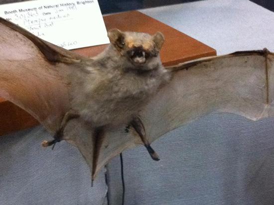 worst funny taxidermy bat