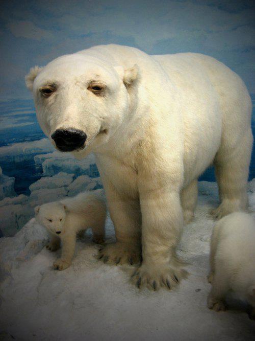 worst funny taxidermy polar bear