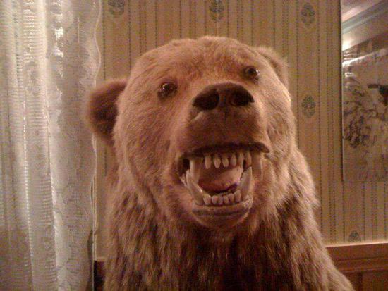 worst funny taxidermy bear