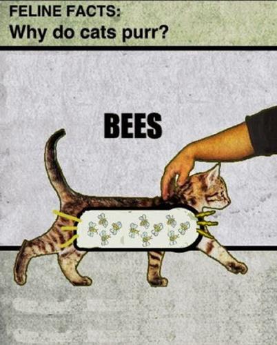 cat-bees purr