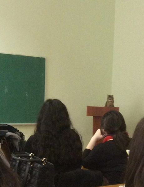 cat professor