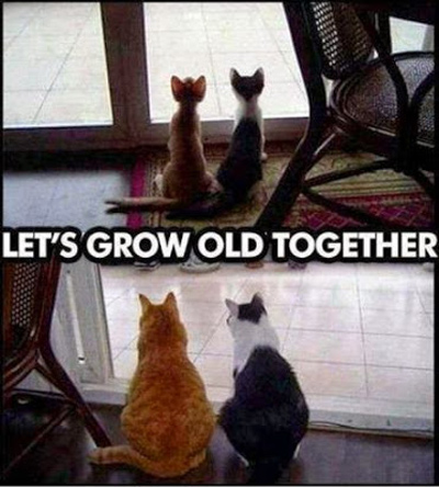 cats-grow-old