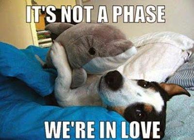 funny-dog-phase