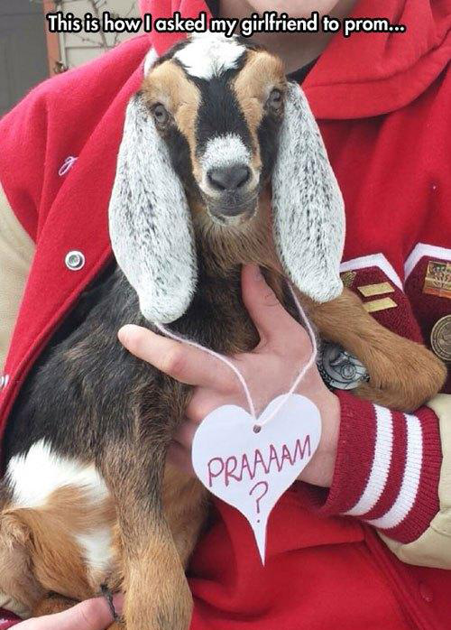 funny-prom-proposals-goat