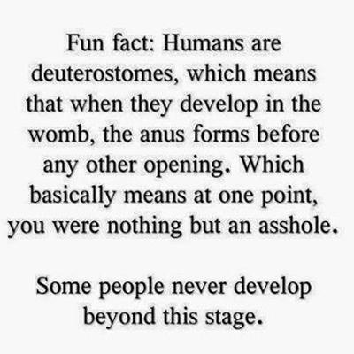 humans-asshole
