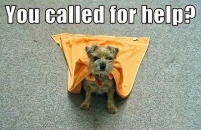 super-dog-cute