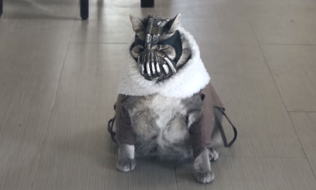 bane cat video