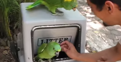 parrot laughs like a human