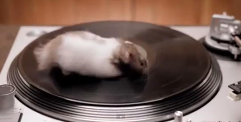 gerbils on record players