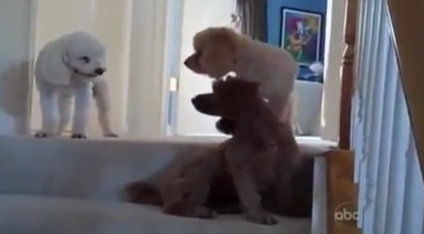 guilty dog video