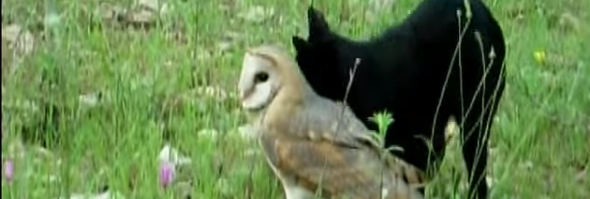 cat owl friends