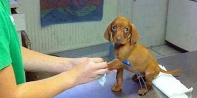 Funny Pictures cute puppy vet