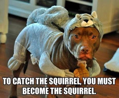 funny pictures become squirrel