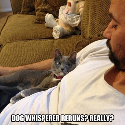 Funny Pictures dog whisperer cat