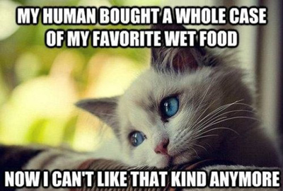 Funny Pictures cat hates food