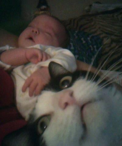 Cat Photobomb Pictures Cat-photobomb-baby2