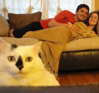 The Best Cat Photobombs Ever