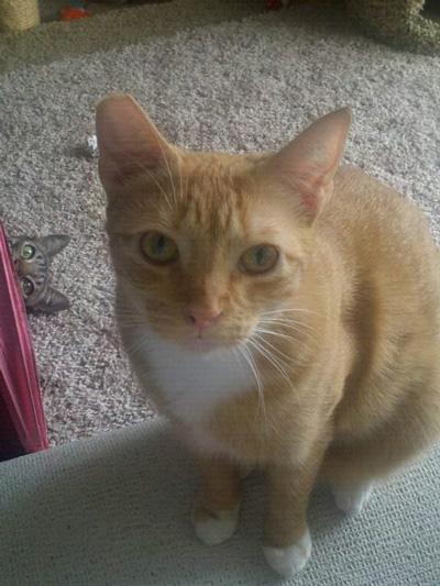 The Best Cat Photobombs Ever
