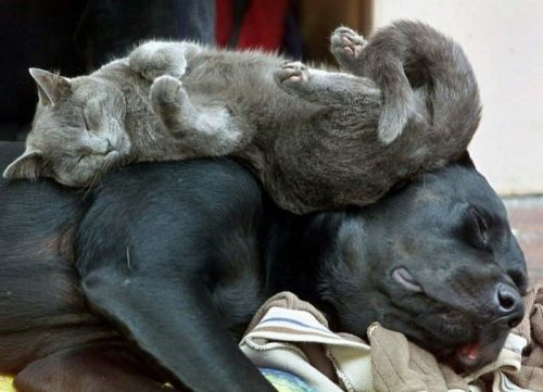 Cats on Dogs stretching