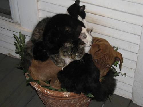 Cats on Dogs piled on
