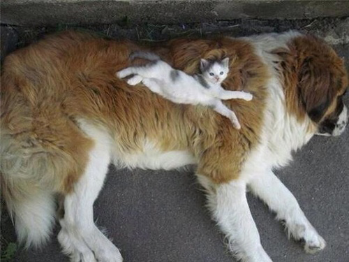 Cats on Dogs kitten
