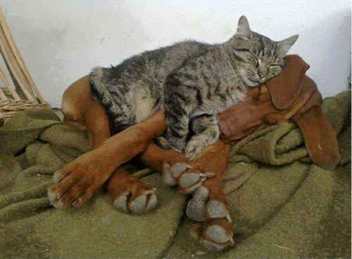 Cats on Dogs comfortable