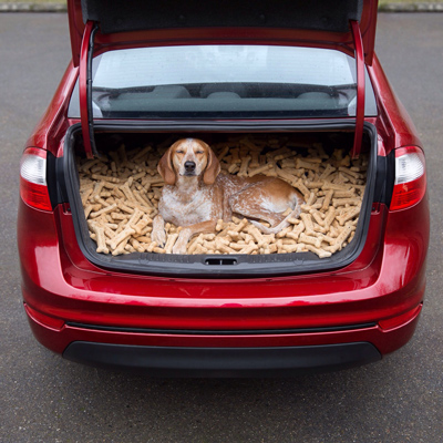 Funny Pictures dog in biscuits trunk