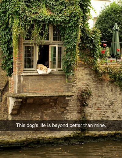 Funny Pictures best dog life
