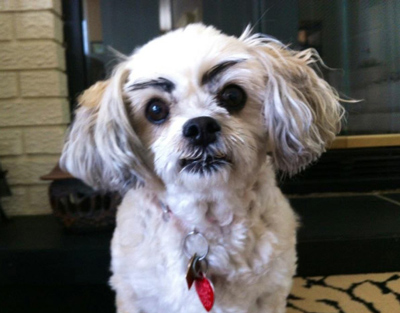 Dogs with Eyebrows angry
