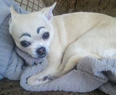 Dogs with Eyebrows sad