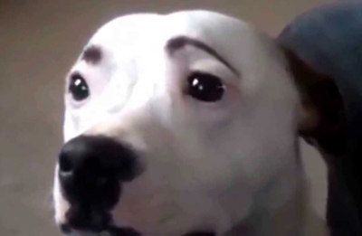 Dogs with Eyebrows concerned