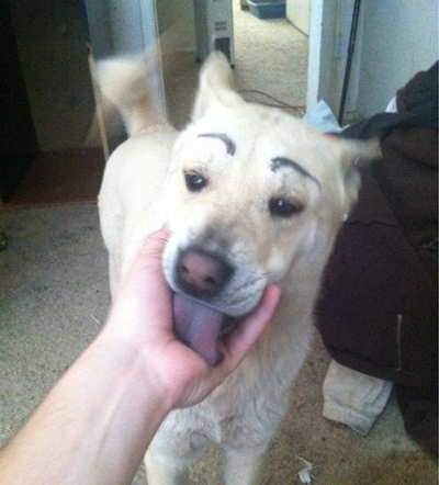 Dogs with Eyebrows licking