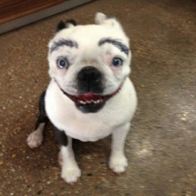 Dogs with Eyebrows perfect
