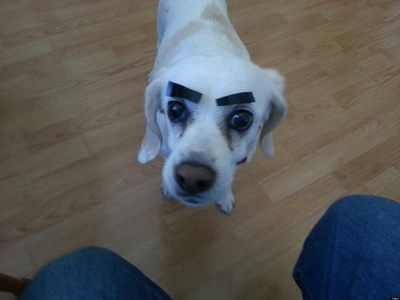 Dogs with Eyebrows treats