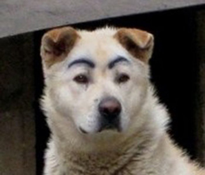 Dogs with Eyebrows casual