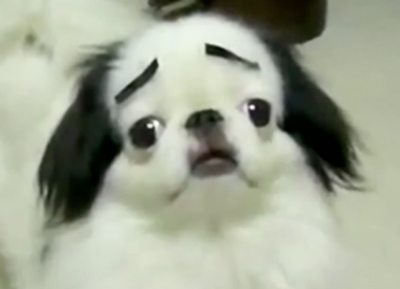 Dogs with Eyebrows funny