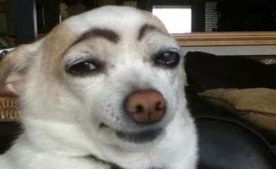 20 Hilarious Dogs With Eyebrows - Dose of Funny