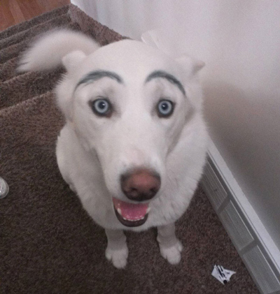 Dogs with Eyebrows excited