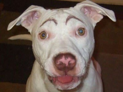 Dogs with Eyebrows happy