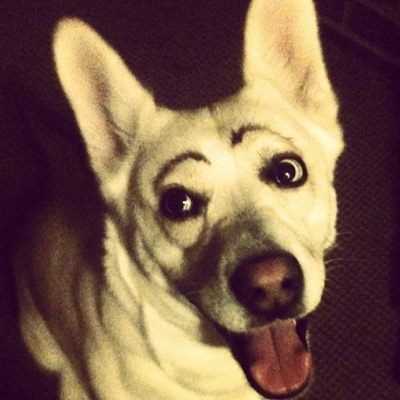 Dogs with Eyebrows puppy