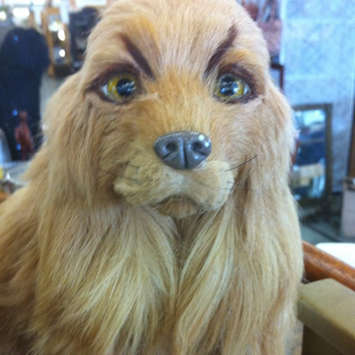 Dogs with Eyebrows weird