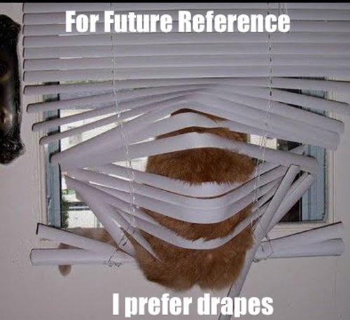 Animals Stuck in Funny Positions cat prefer drapes