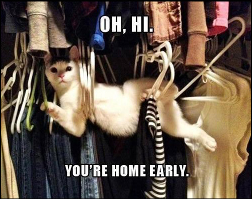 Animals Stuck in Funny Positions you're home early cat