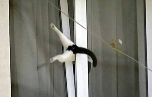 Dog in Hammock and Other Animals Stuck in Funny Positions cat in window