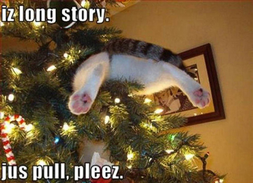 Dog in Hammock and Other Animals Stuck in Funny Positions christmas tree cat