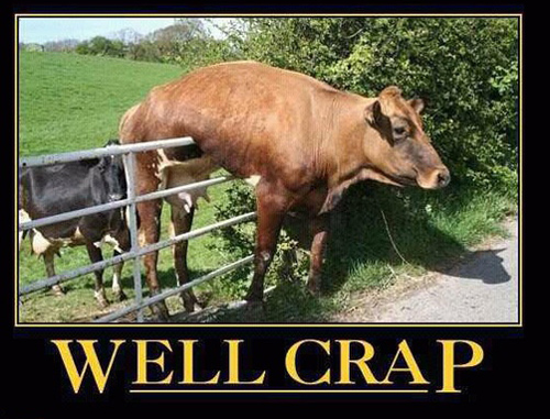Dog in Hammock and Other Animals Stuck in Funny Positions fence cow