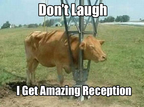 cow moo quotes