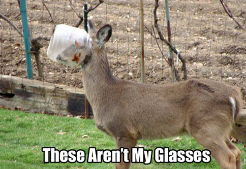 Dog in Hammock and Other Animals Stuck in Funny Positions glasses deer